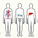 The Blueprint of Our Body: A Map of Our Physical (Well) Being